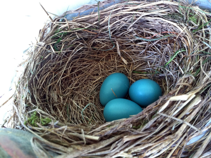 robin nest porch